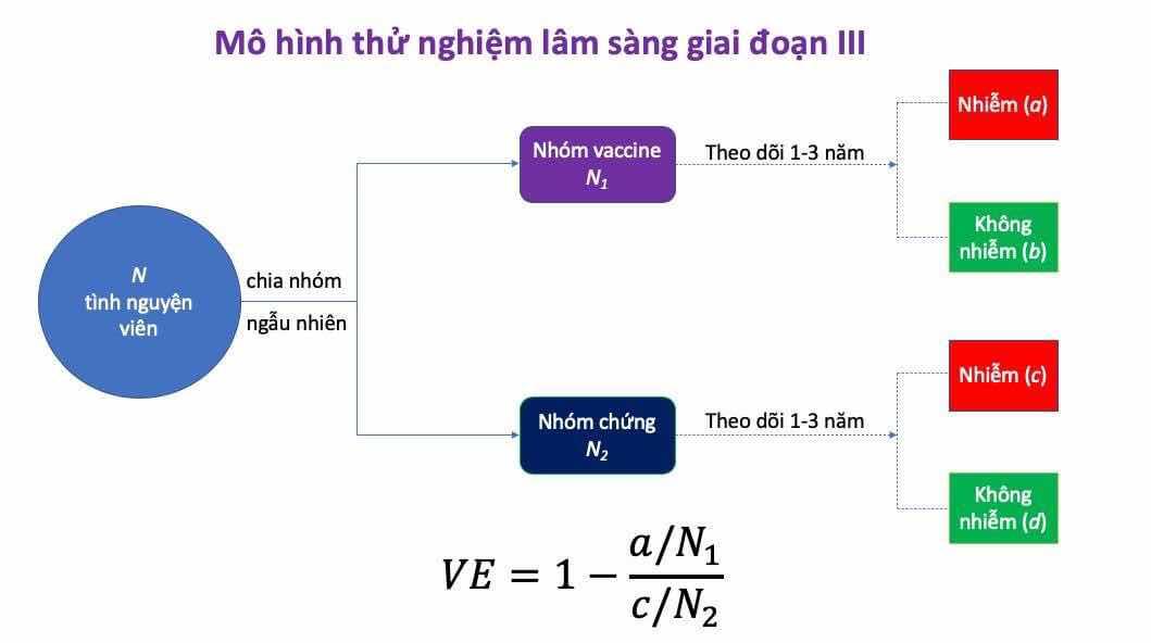 Ghi chú hình: Thử nghiệm lâm sàng giai đoạn III thường phải tuyển N tình nguyện viên. Họ sẽ được chia nhóm ngẫu nhiên: nhóm vaccine có N1 người, và nhóm chứng có N2 người (N1 + N2 = N). Mỗi cá nhân sẽ được theo dõi 1-3 năm để ghi nhận số ca bị nhiễm. Gọi số ca nhiễm trong nhóm vaccine là a, và trong nhóm chứng là c. Hệ số hiệu quả vaccine hay VE được định nghĩa là VE = 1 - (a/N1) / (c/N2).