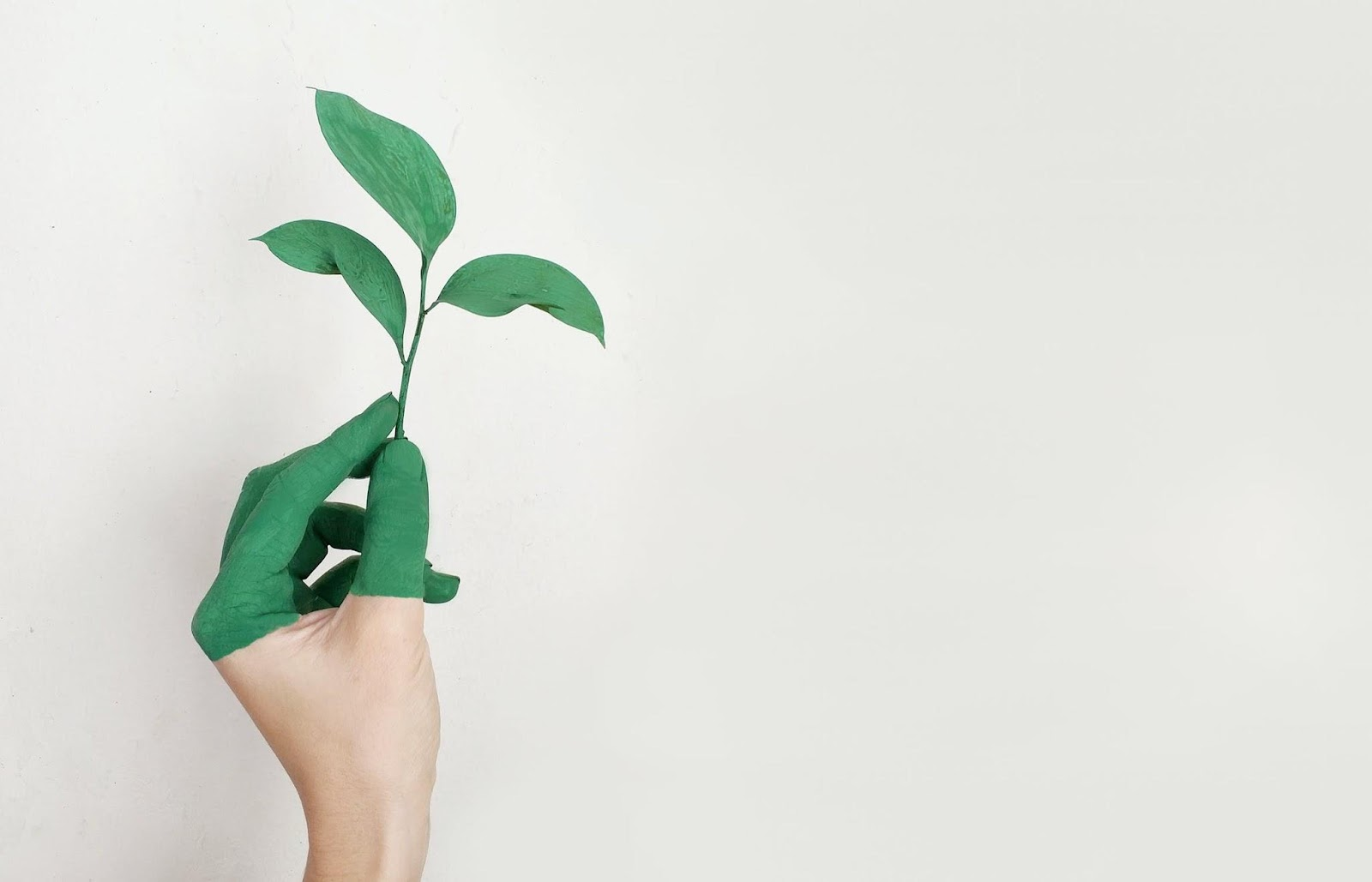 Growing A Business While Remaining Eco-Friendly