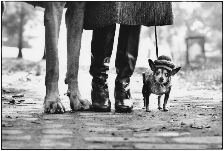 A black and white photo of a small dog wearing a hat, stood next to the legs of its owner and a larger dog, by famous photographer Elliott Erwitt