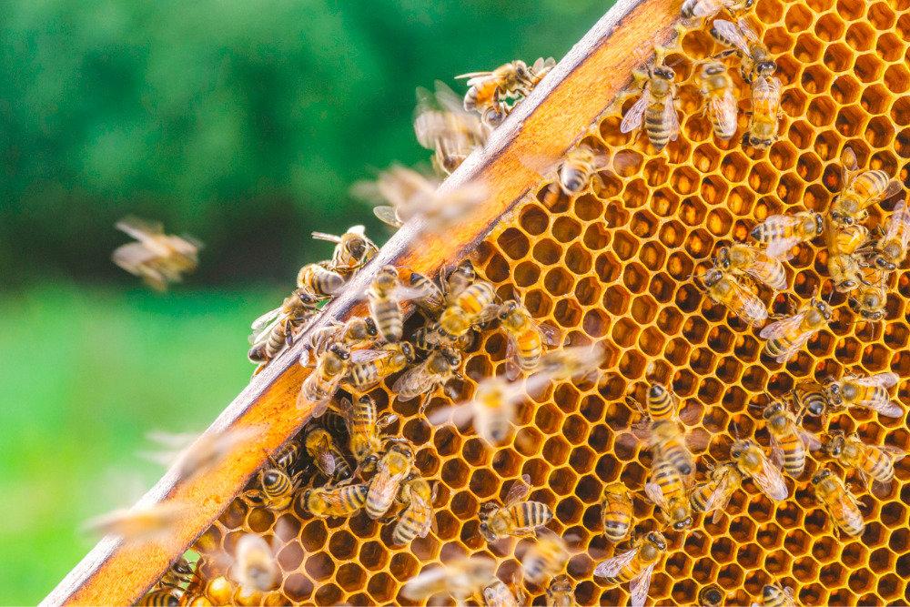 Що викликає злобливість бджіл