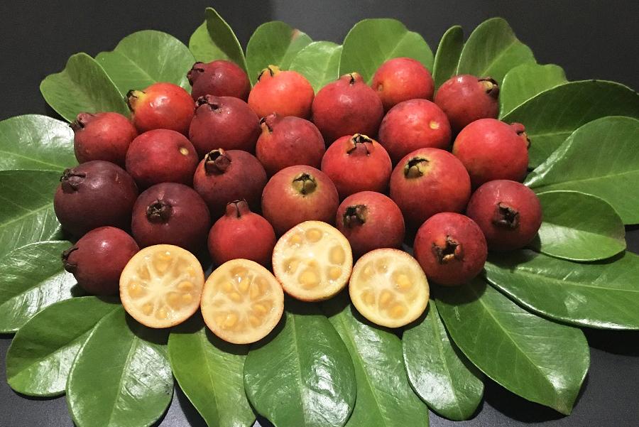 Árvores frutíferas: embelezam e alimentam. – AmorQC