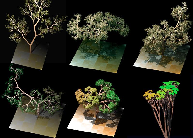 https://upload.wikimedia.org/wikipedia/commons/7/74/Dragon_trees.jpg