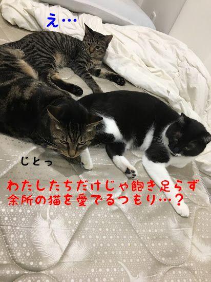街へ出よう!猫好きによる猫好きのための猫旅のすすめ