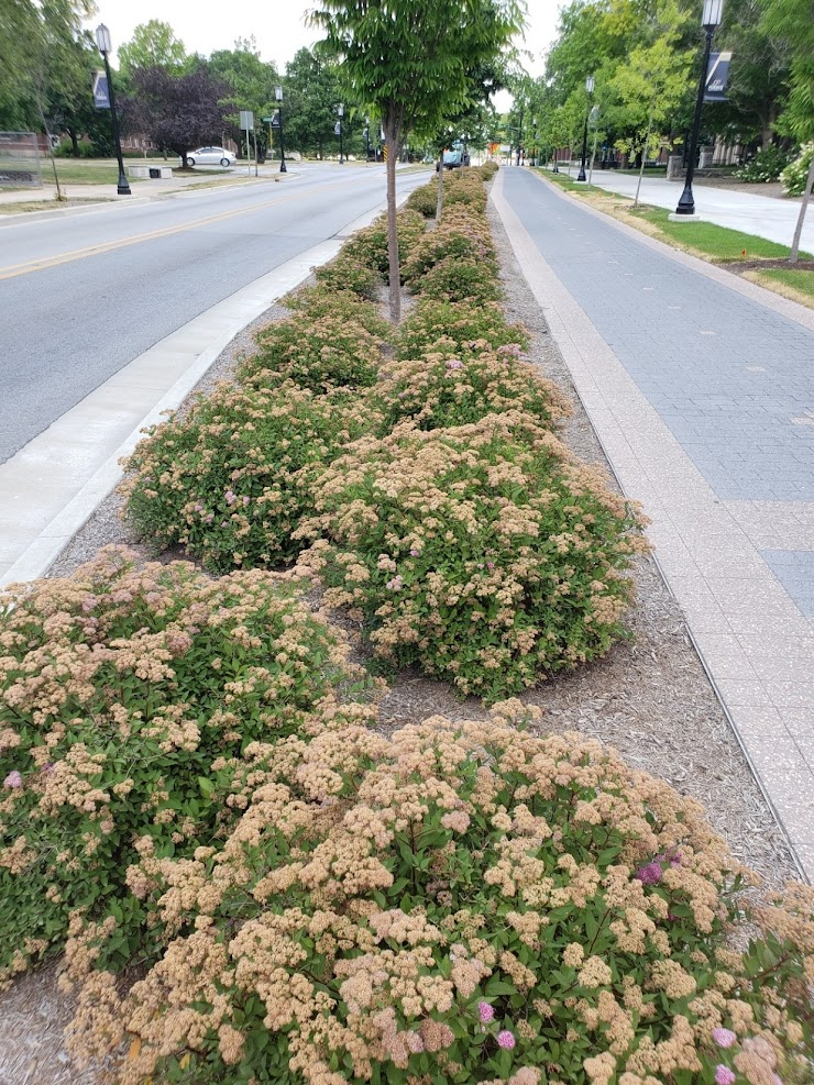 Picture: Plants between a road and a trail help to absorb rain water runoff.