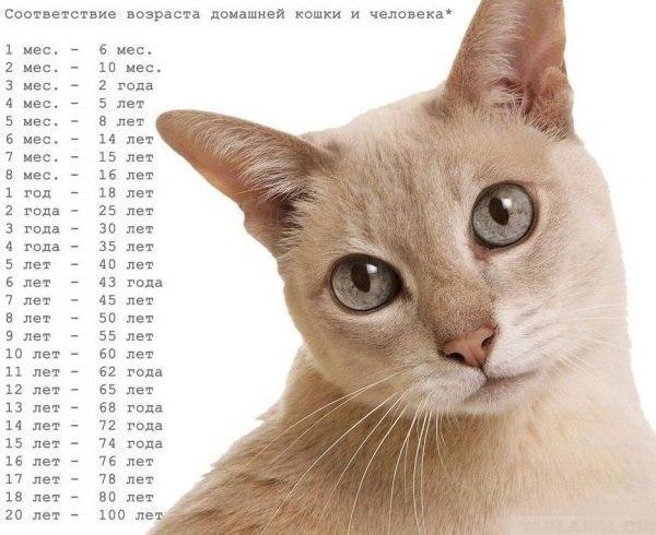 Sootvetsvie-vozrasta-koshki-i-cheloveka (600x490, 66Kb)