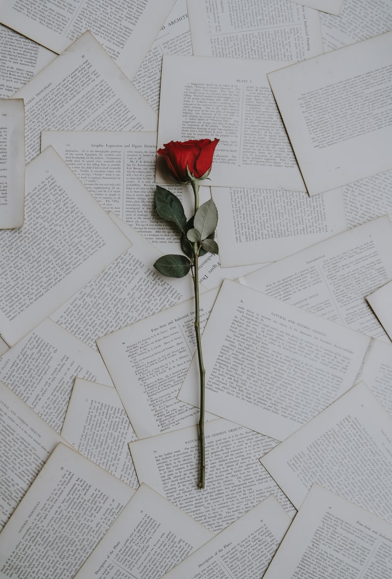 a rose on book pages