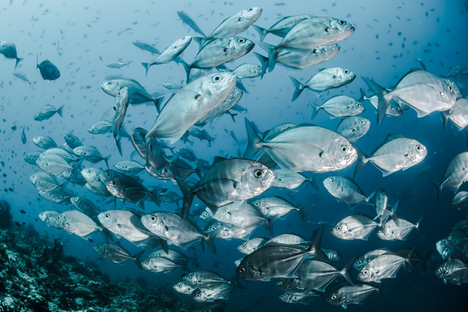 what is World Ocean Day