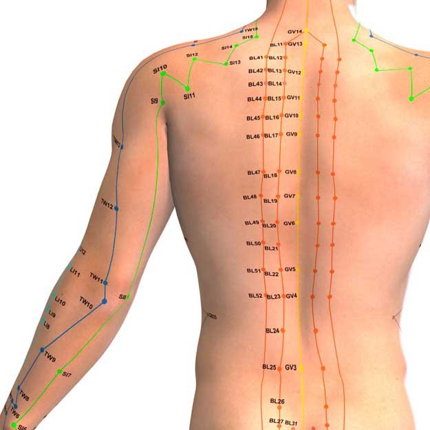 Back acupuncture points