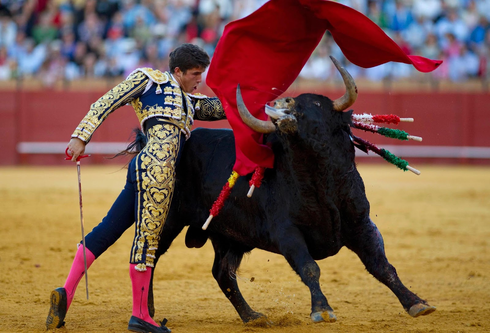 C:\Users\rwil313\Desktop\Bullfighting picture.jpg