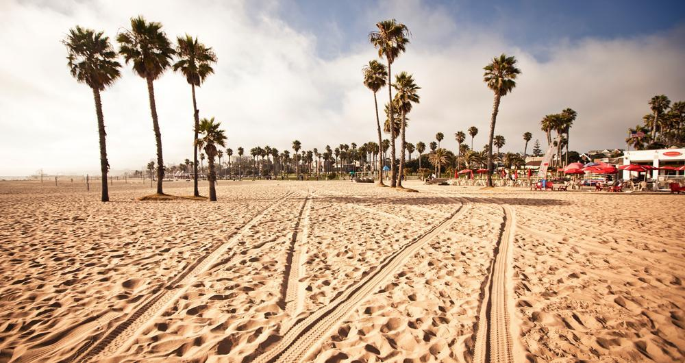 Photo of palms and sand