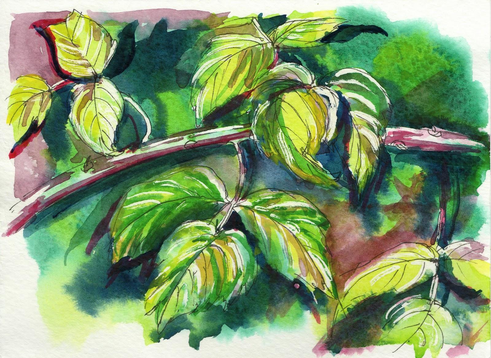 painting of raspberry leaves