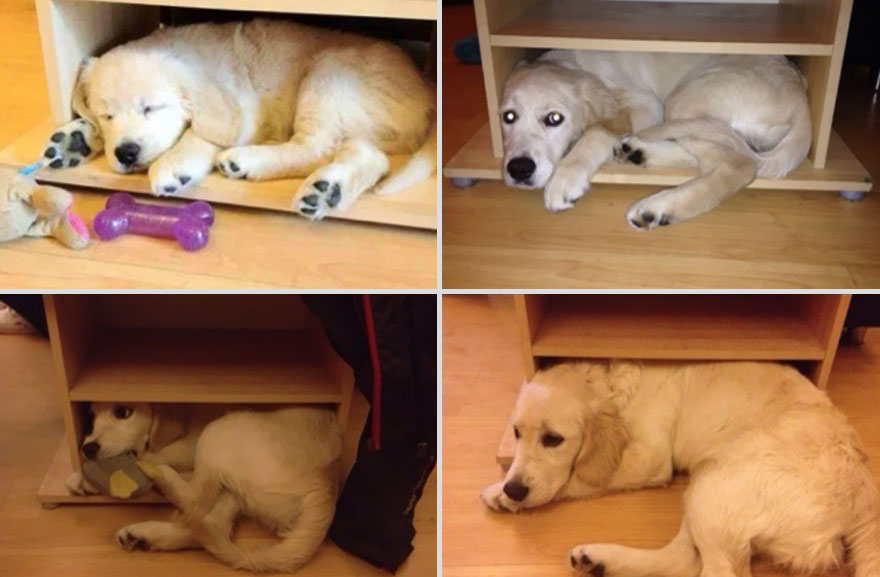 pets-before-after-21