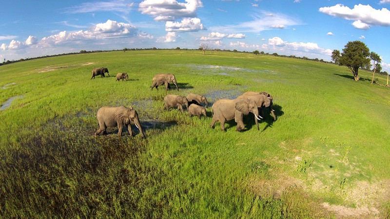 Ngamo Plains Hwange