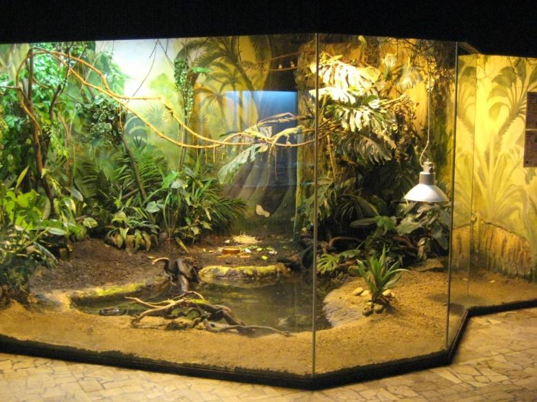 Image result for green anaconda cage