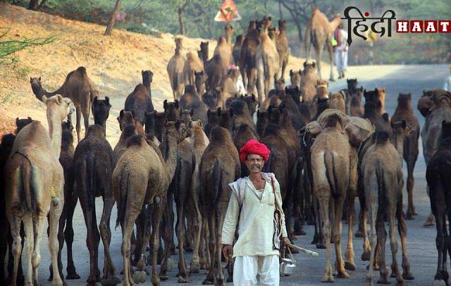 Brahma Temple, camel fair 2018 dates, cattle, festivals, photography, pushkar fair 2018, pushkar mela history, religious, Varaha Temple