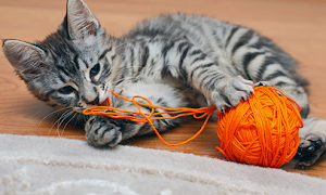 Why do Cats Swallow String