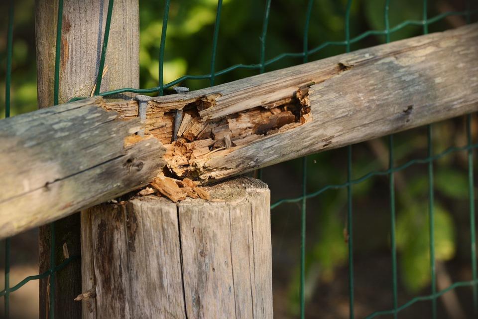 Wovor muss Holz geschützt werden?