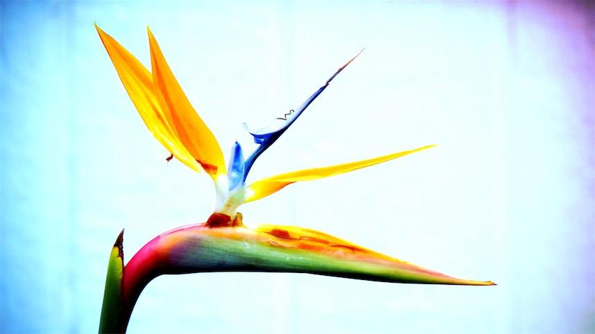 Bird Of P 9x16.jpg
