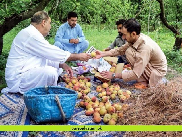 https://www.purepakistani.pk/wp-content/uploads/2018/11/peaches-1.jpg