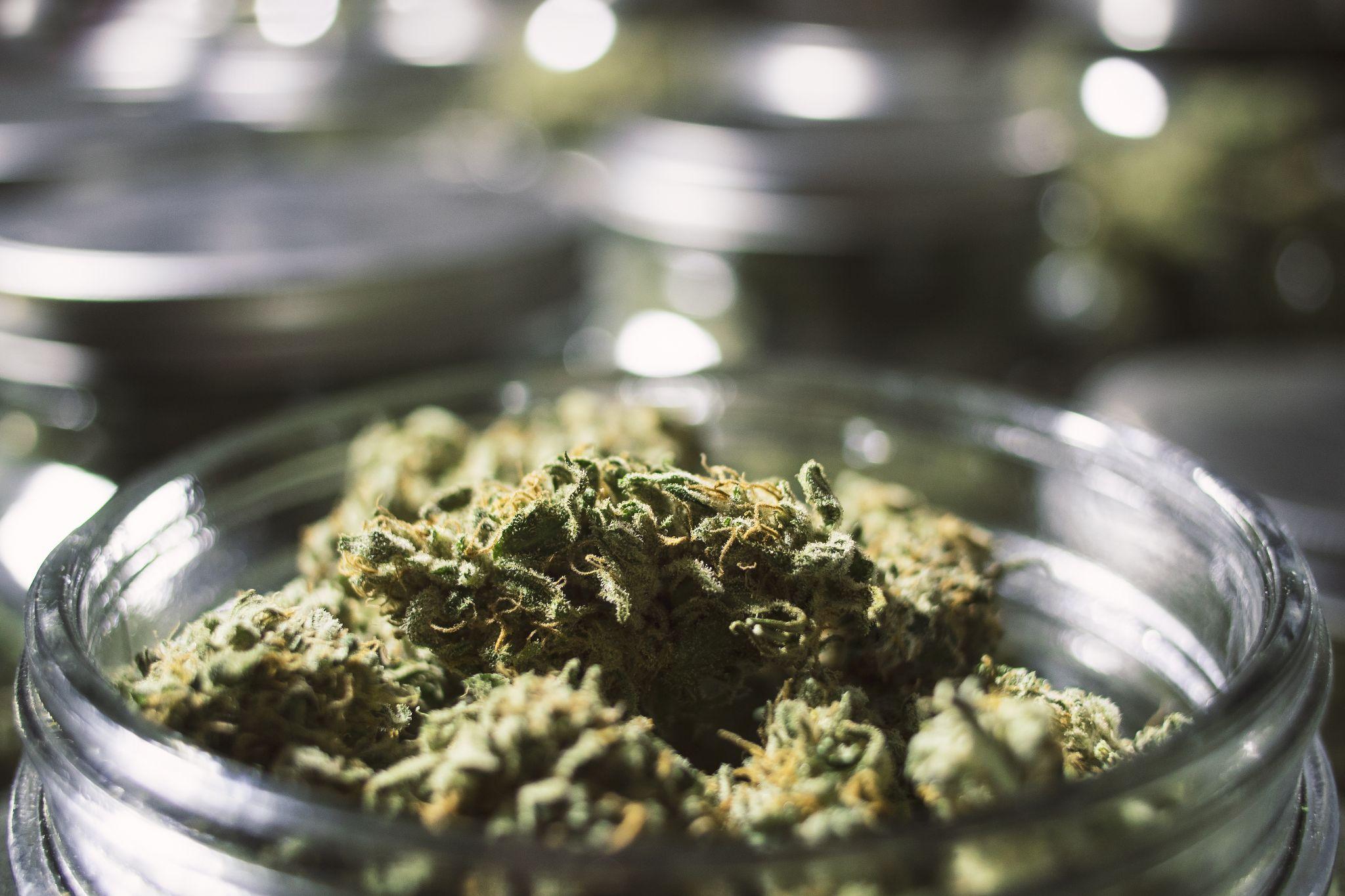 Jar of fresh cannabis flower