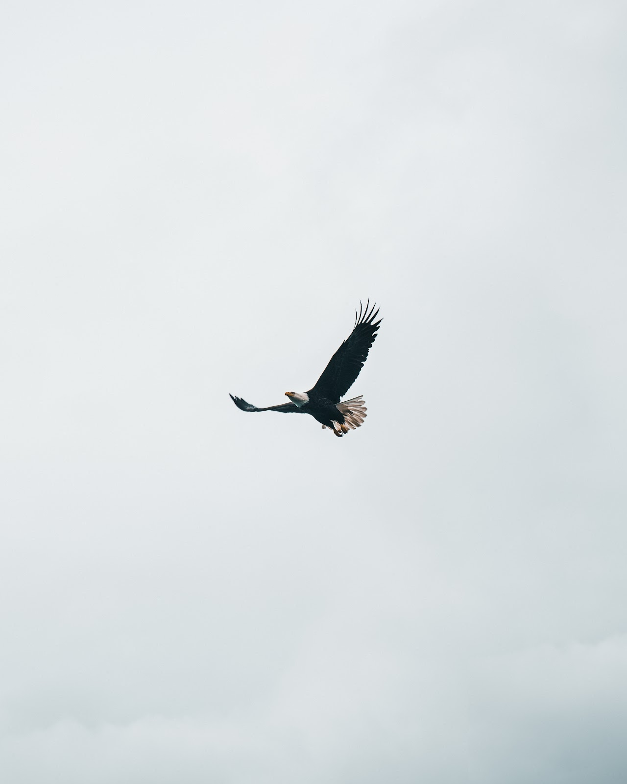 Eagle flying against a gray sky with wings outstretched