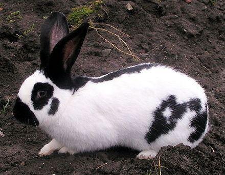 Image result for blanc de popielno popielno white rabbit videos