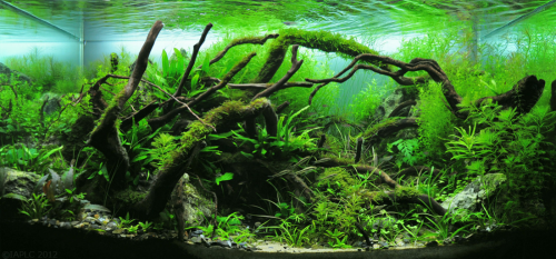 How To Get Started With Freshwater Aquascaping 2