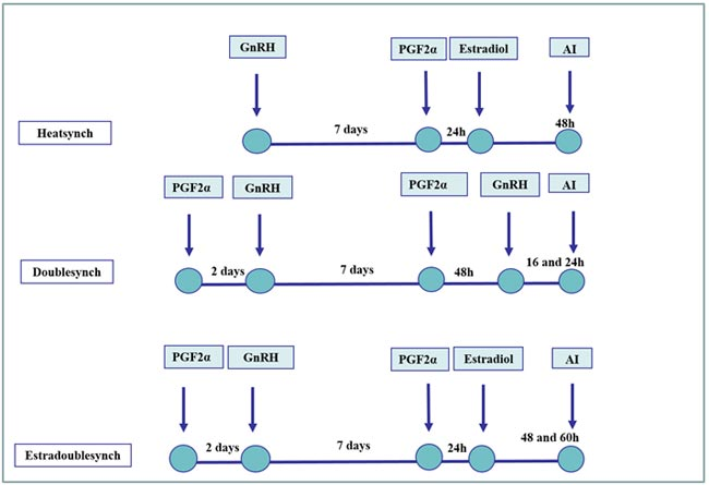 Esquema de sincronización del estro basado en la manipulación del crecimiento folicular y el momento de la ovulación: modificación del programa Ovsynch (Heatsynch, Doublesynch, Estradoublesynch) utilizado con éxito en búfalas cíclicas.