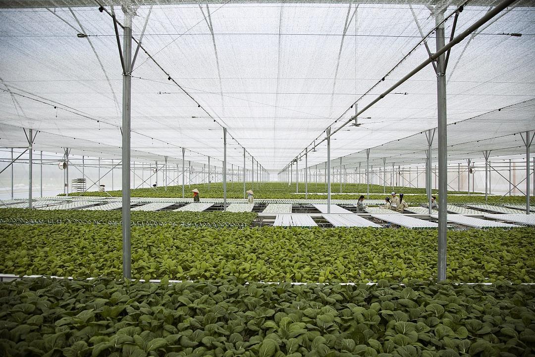 3-Mô hình trồng rau của Vingroup.jpg