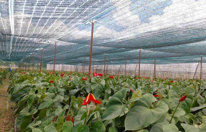 Kết quả hình ảnh cho lưới che nắng trồng rau