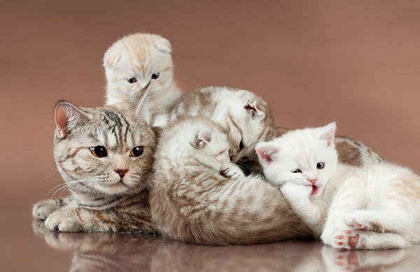 10 Ways That Cats Make Amazing Moms
