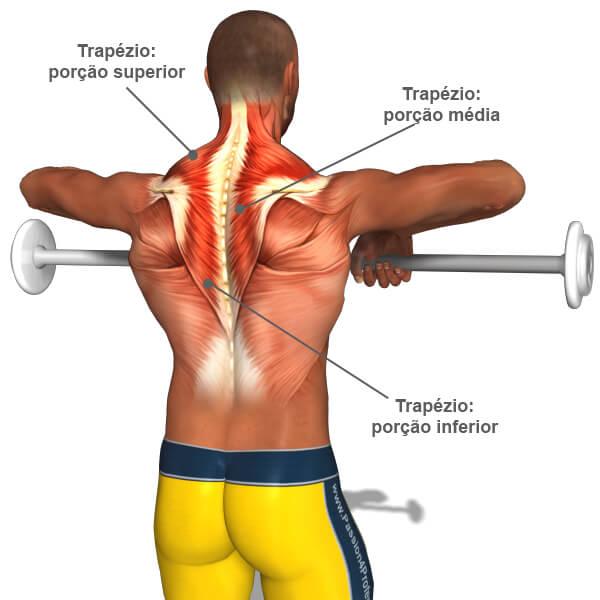 desenho de músculos durante exercício