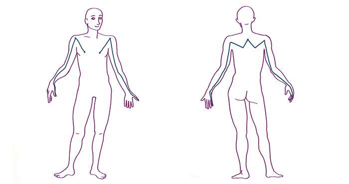 https://fasciaguide.com/wp-content/uploads/2019/11/007-Fascia-Guide-Fascia-Superficial-Front-Arm-Line-Superficial-Back-Arm-Line.jpg