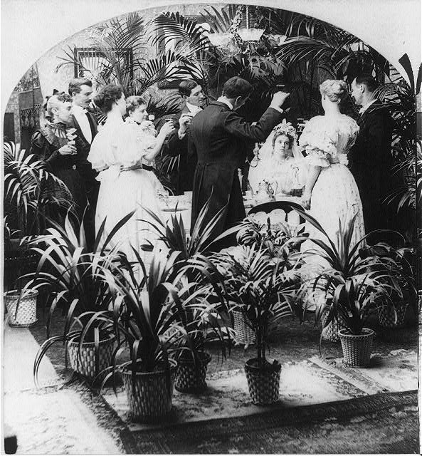 victorians and houseplants