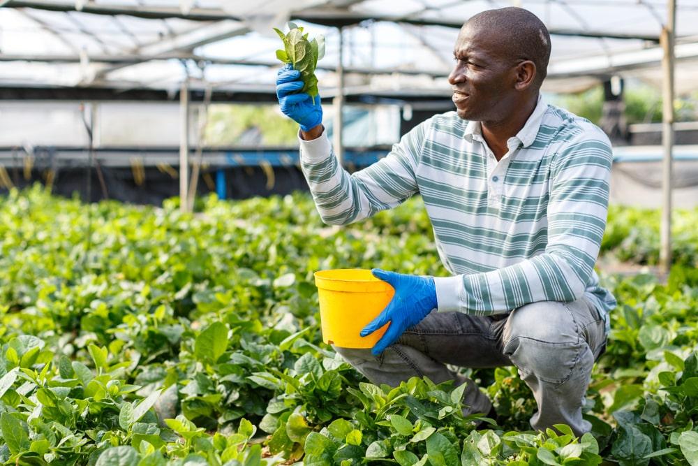Agronegócio é um dos setores que mais gera emprego no Brasil. (Fonte: Shutterstock)
