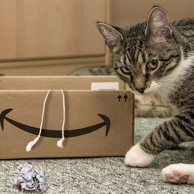 How do you stop cardboard chewing in cats?