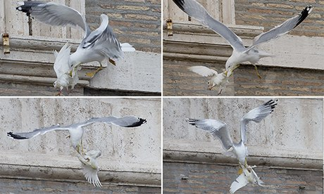 Seagull attacks dove
