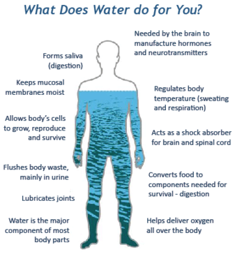 Graphic showing what water is for in a human body.