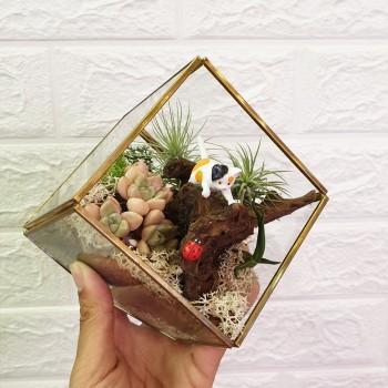 best terrarium in singapore