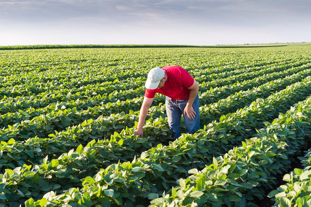 Soja foi o cultivo que gerou mais empregos de carteira assinada em fevereiro. (Fonte: Shutterstock/Fotokostic/Reprodução)