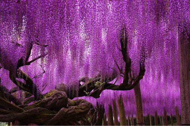 1_amazing-trees-2.jpg
