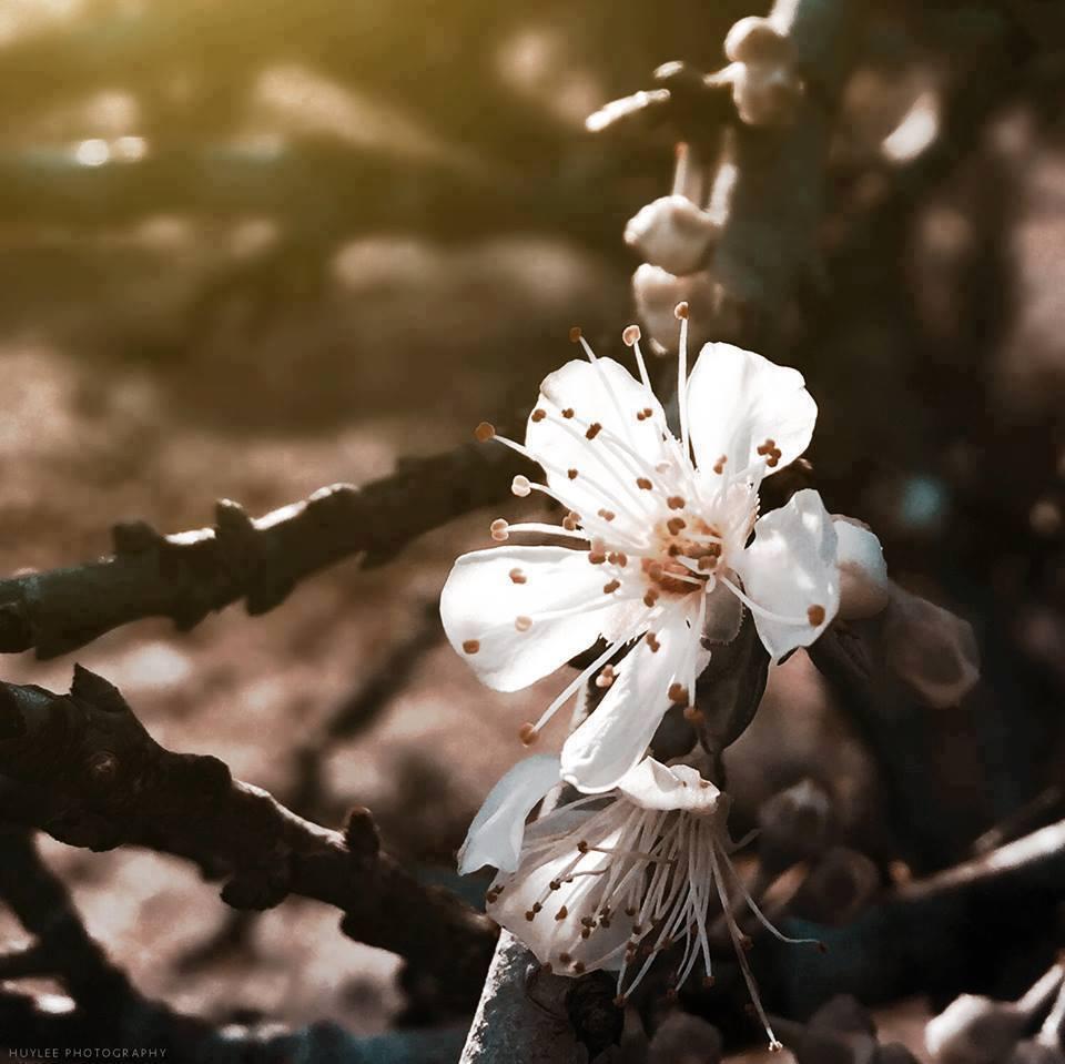 Mộc Châu – nơi những nàng tiên xuân ngự trị - ảnh 4