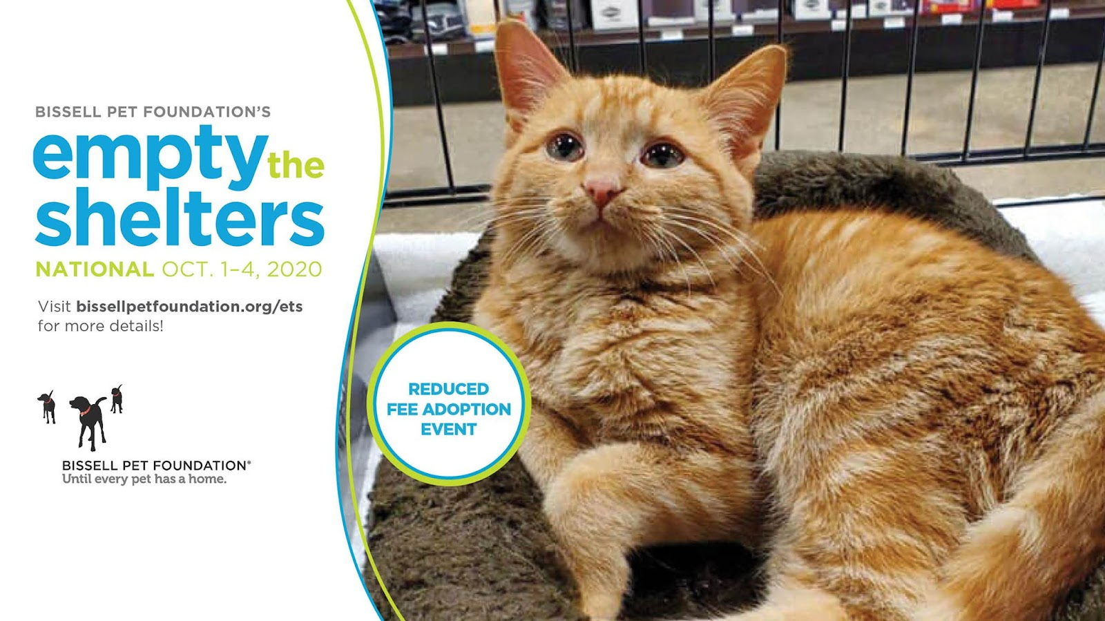 Empty the Shelters event