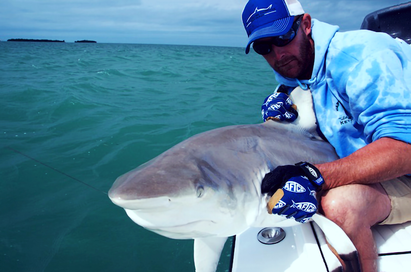 Image of a man with a Shark at the side of the boat in the Florida Keys