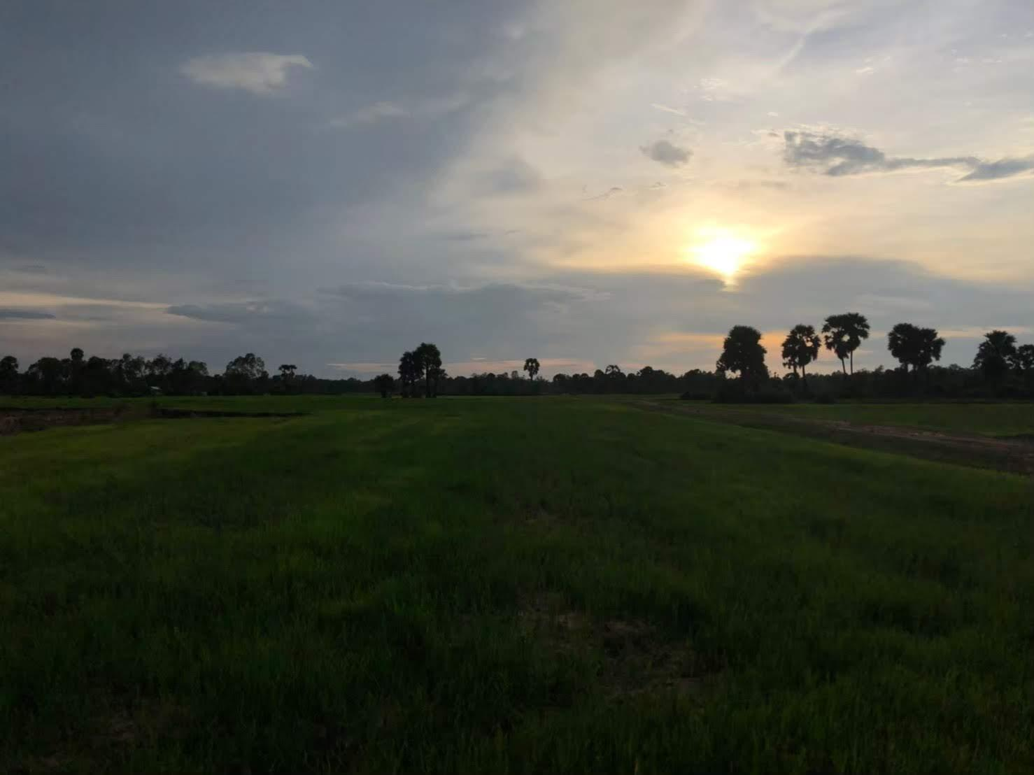 草の上に雲のある空  自動的に生成された説明