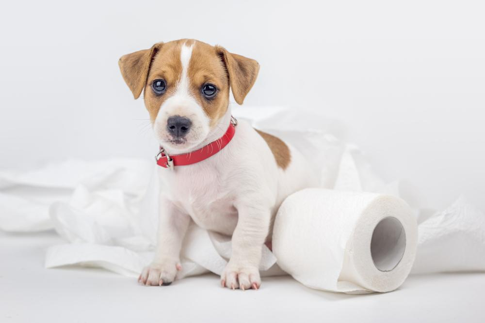 puppy surrounded by toilet paper