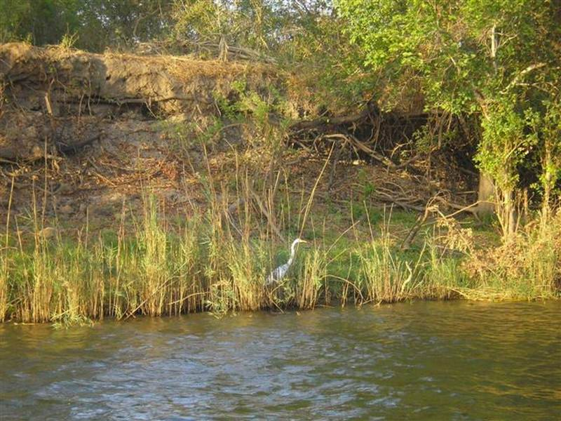 bird life on the banks of the river.jpg