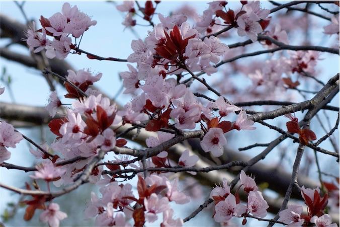 Blossoms 24 3.jpg