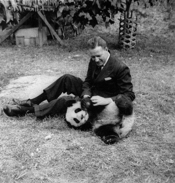 halliburton panda.jpg