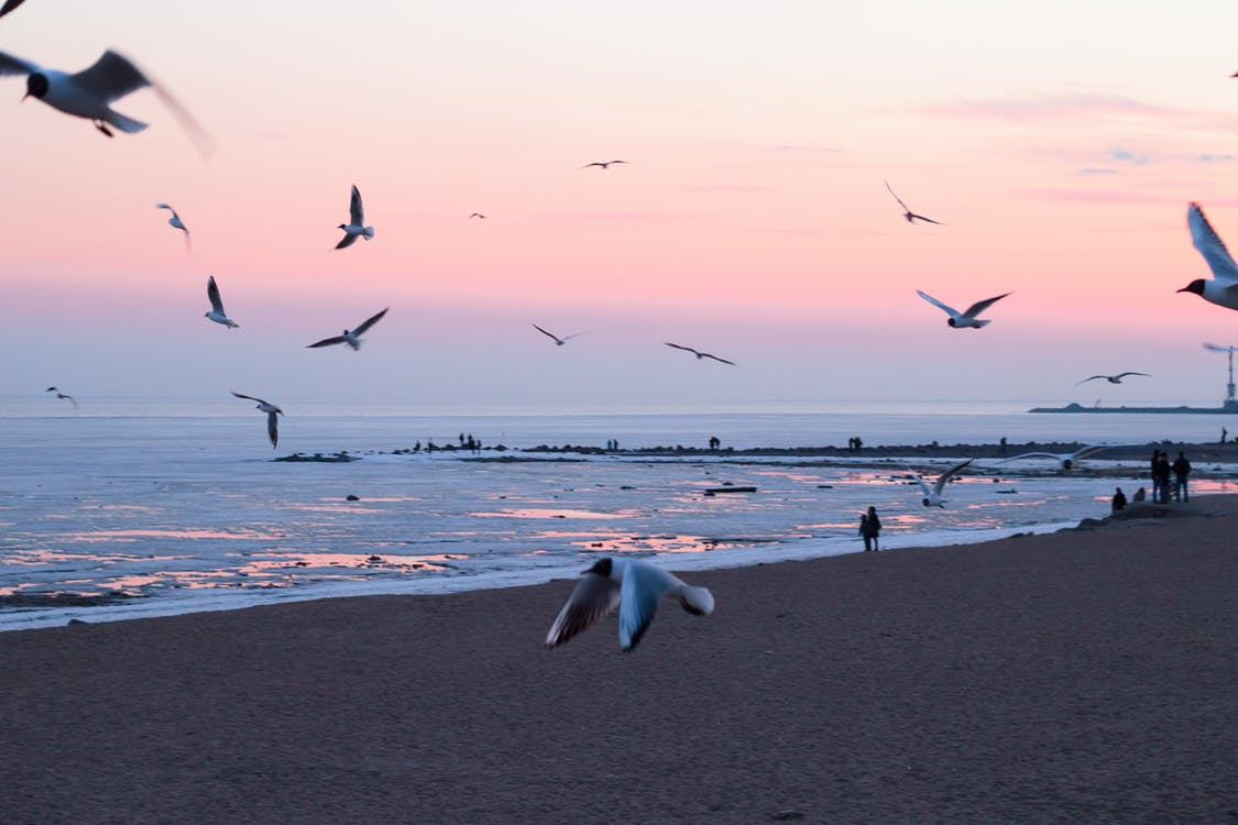 Photo of Flying Birds On Beach